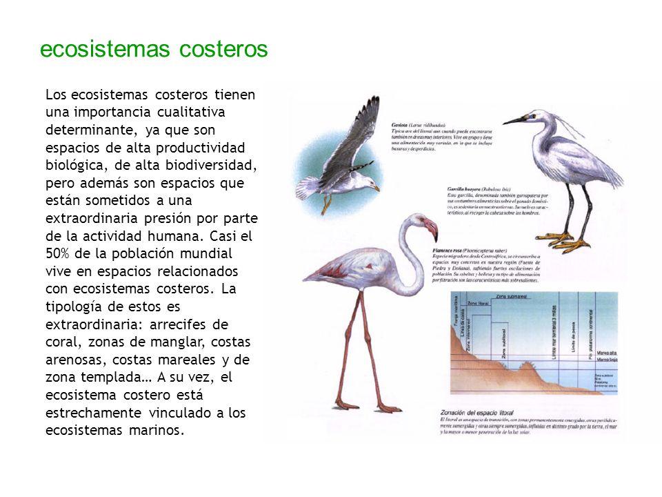 ecosistemas costeros Los ecosistemas costeros tienen una importancia cualitativa determinante, ya que son espacios de alta productividad biológica, de