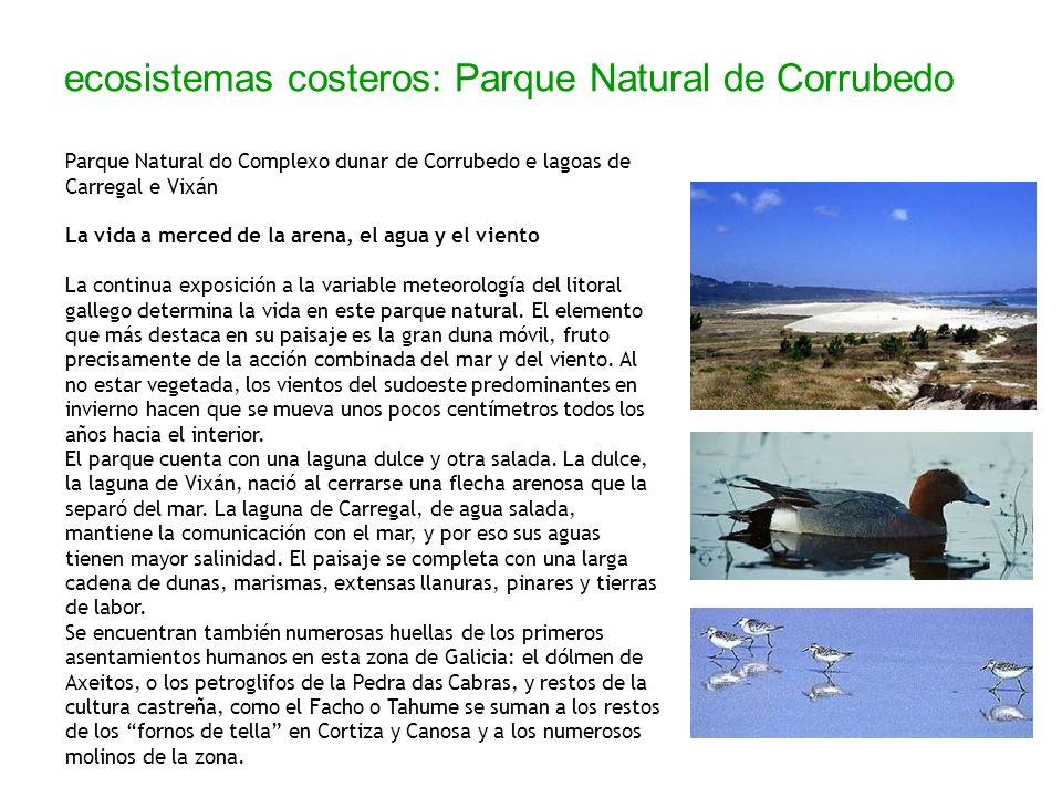 ecosistemas costeros: Parque Natural de Corrubedo Parque Natural do Complexo dunar de Corrubedo e lagoas de Carregal e Vixán La vida a merced de la ar