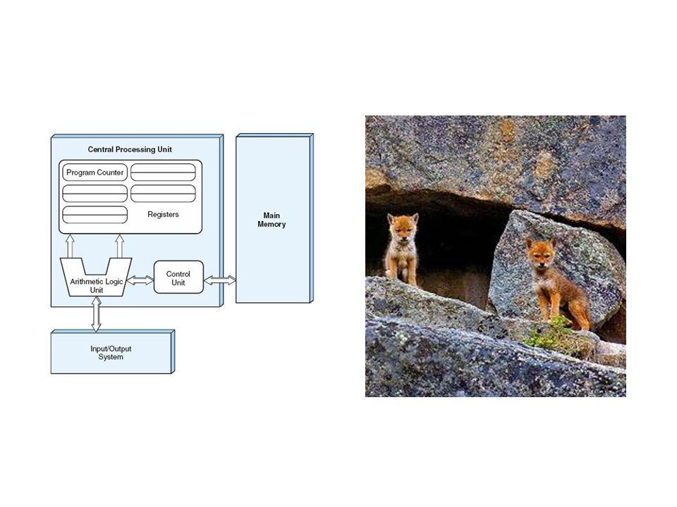 ¿cómo puede fragmentarse una población animal ?