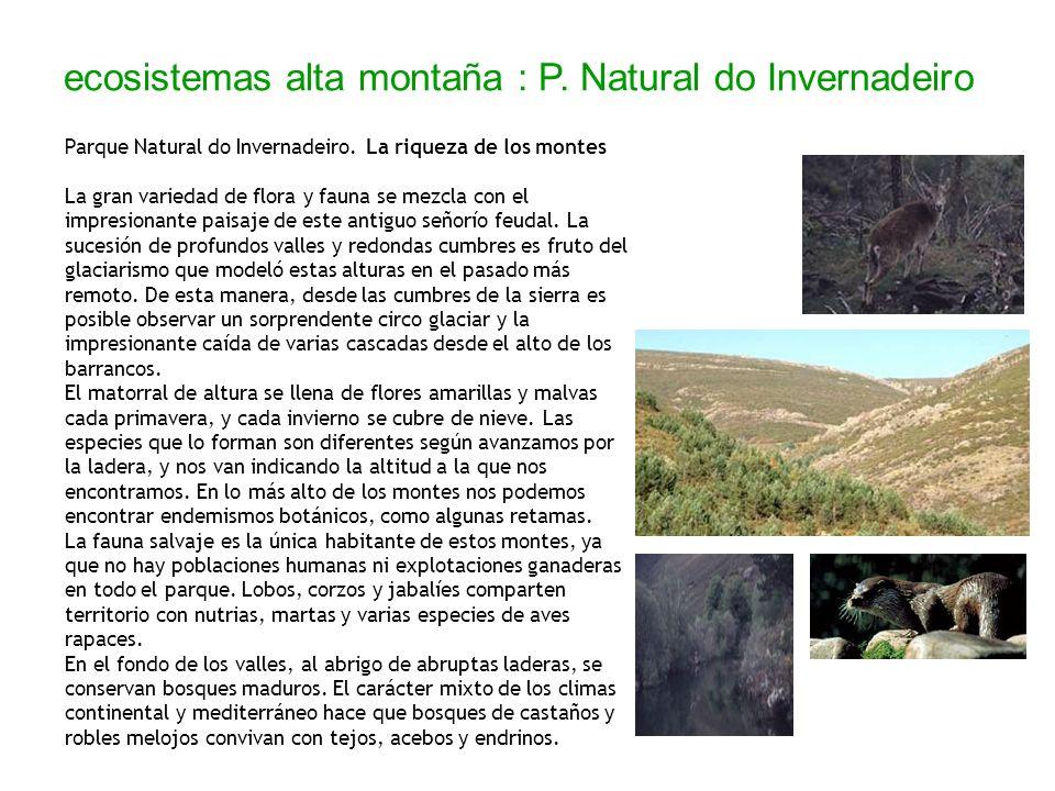 ecosistemas alta montaña : P. Natural do Invernadeiro Parque Natural do Invernadeiro. La riqueza de los montes La gran variedad de flora y fauna se me