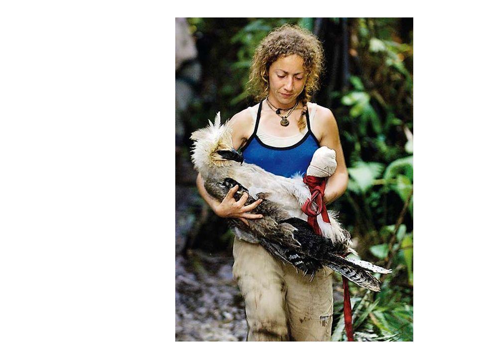 http://www.elpais.com/fotografia/Ruth/ Muniz/rescata/aguila/harpia/herida/elp diasoc/20080316elpepspor_3/Ies/