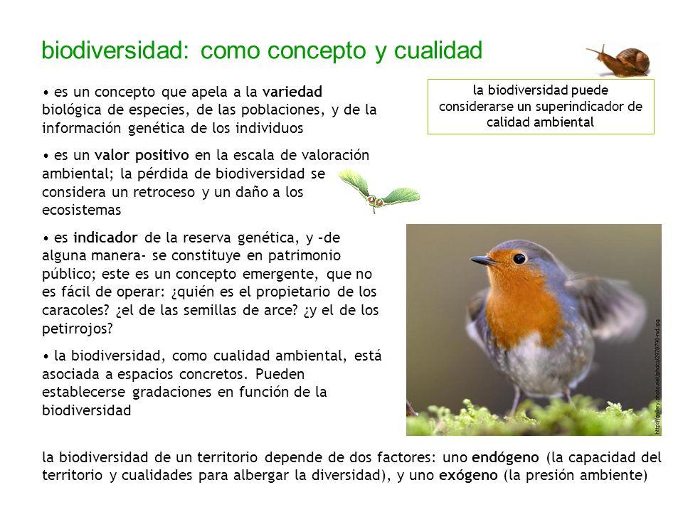 biodiversidad: línea base e indicadores Los parámetros que permiten aproximar la biodiversidad de un espacio son: 1) la composición de especies; 2) la riqueza específica (variabilidad en ese espacio); 3) la abundancia; y 4) la biomasa total.
