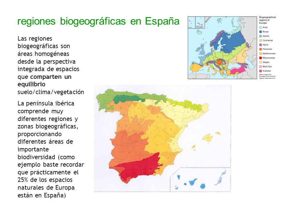 regiones biogeográficas en España Las regiones biogeográficas son áreas homogéneas desde la perspectiva integrada de espacios que comparten un equilib
