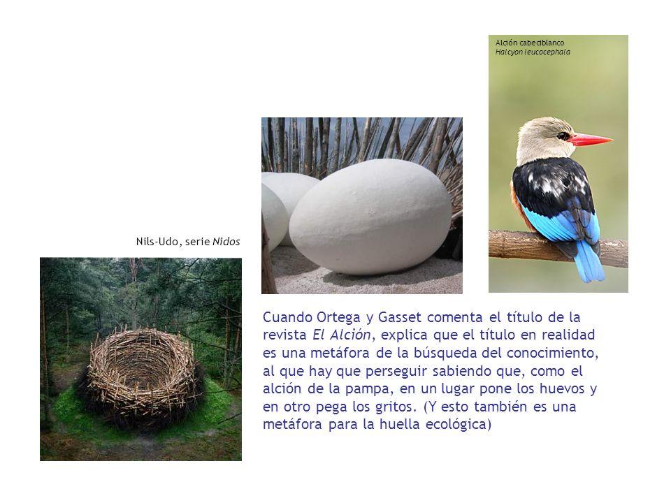 Cuando Ortega y Gasset comenta el título de la revista El Alción, explica que el título en realidad es una metáfora de la búsqueda del conocimiento, a