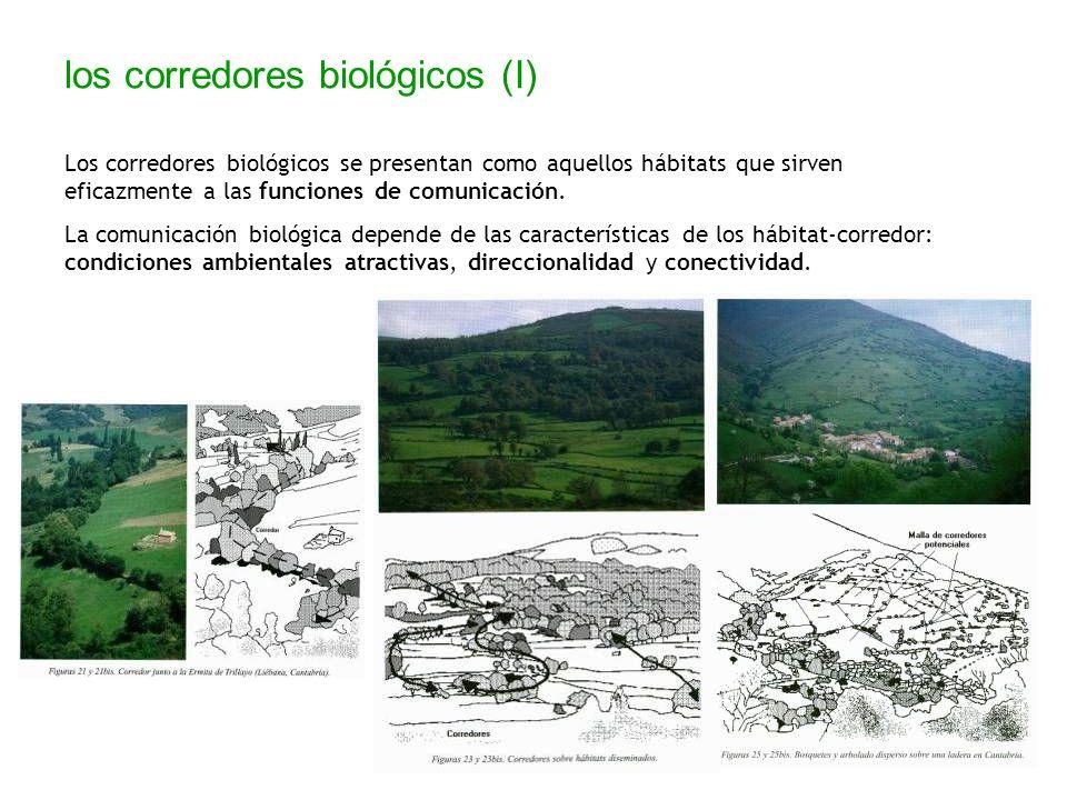 los corredores biológicos (I) Los corredores biológicos se presentan como aquellos hábitats que sirven eficazmente a las funciones de comunicación. La