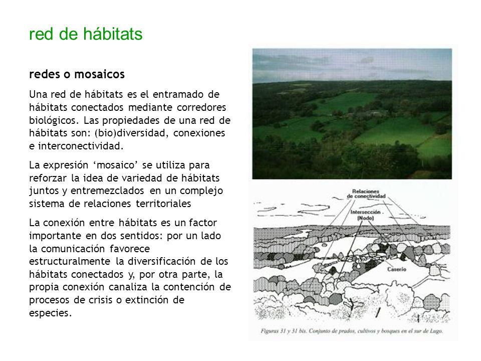 red de hábitats redes o mosaicos Una red de hábitats es el entramado de hábitats conectados mediante corredores biológicos. Las propiedades de una red