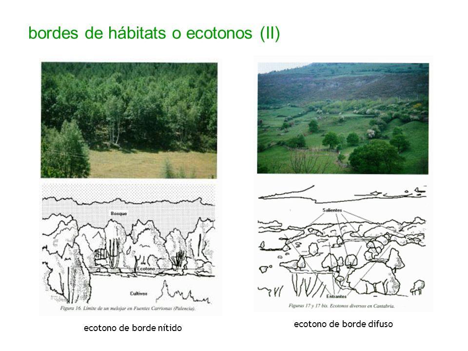 bordes de hábitats o ecotonos (II) ecotono de borde difuso ecotono de borde nítido