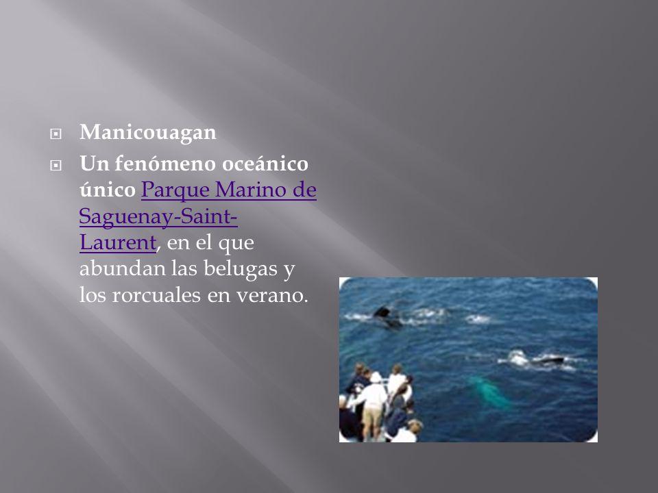 Manicouagan Un fenómeno oceánico único Parque Marino de Saguenay-Saint- Laurent, en el que abundan las belugas y los rorcuales en verano.Parque Marino