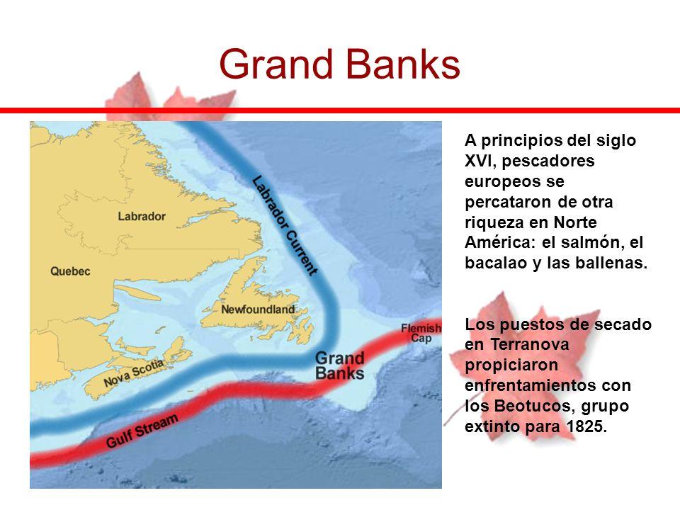 Grand Banks A principios del siglo XVI, pescadores europeos se percataron de otra riqueza en Norte América: el salmón, el bacalao y las ballenas. Los