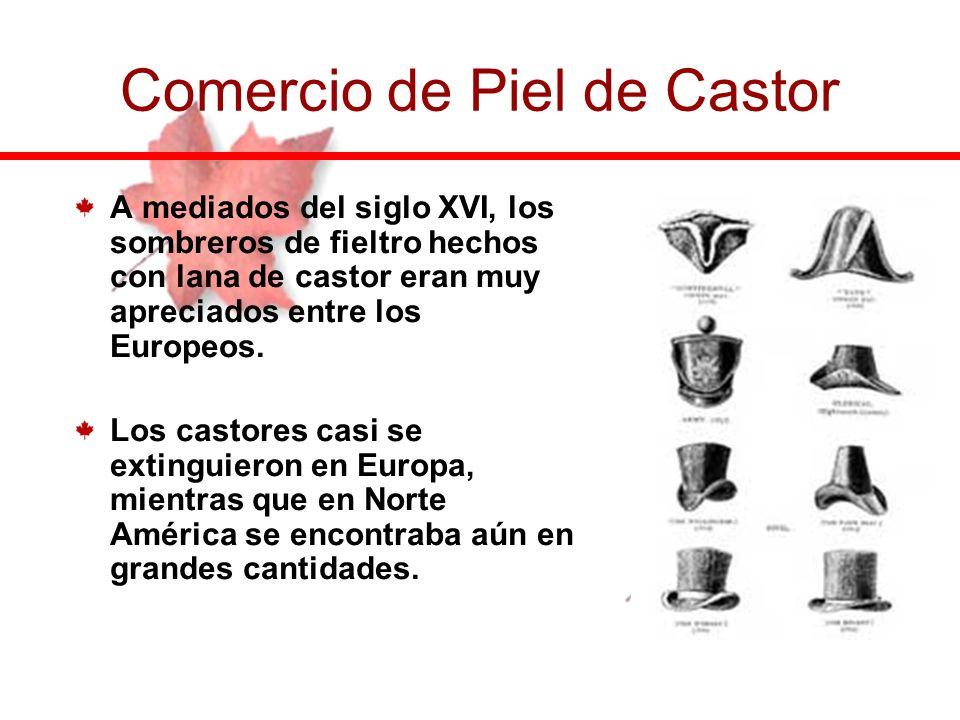 Castor para abrigo: Castor gras. Castor pergamino: Castor sec. Comercio de Piel de Castor