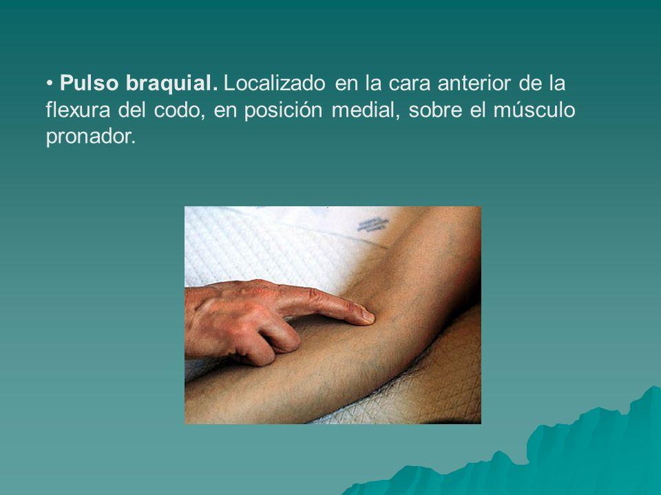 Pulso braquial. Localizado en la cara anterior de la flexura del codo, en posición medial, sobre el músculo pronador.