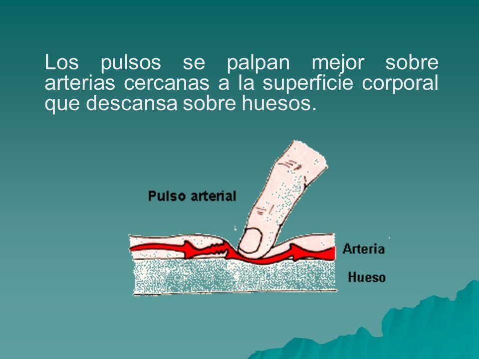 PUNTOS DE PALPACION El pulso arterial se puede palpar en distintas partes del cuerpo.