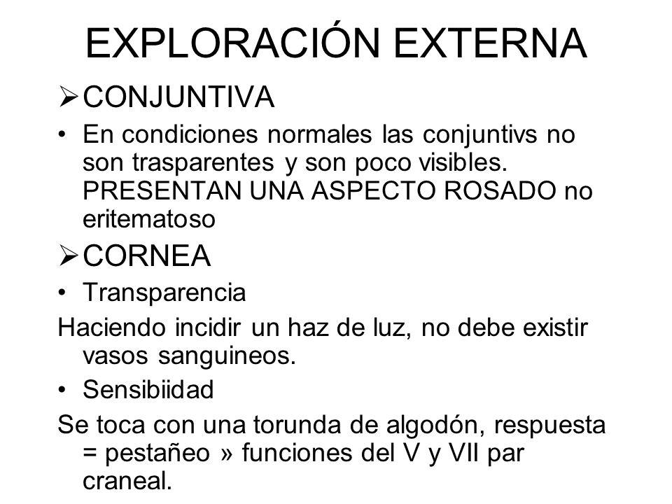 EXPLORACIÓN EXTERNA PARPADOS Cerrar ojos sin fuerza Temblores palpebrales = hipertiroidismo Capacidad de oclusión y abertura completa de los parpados