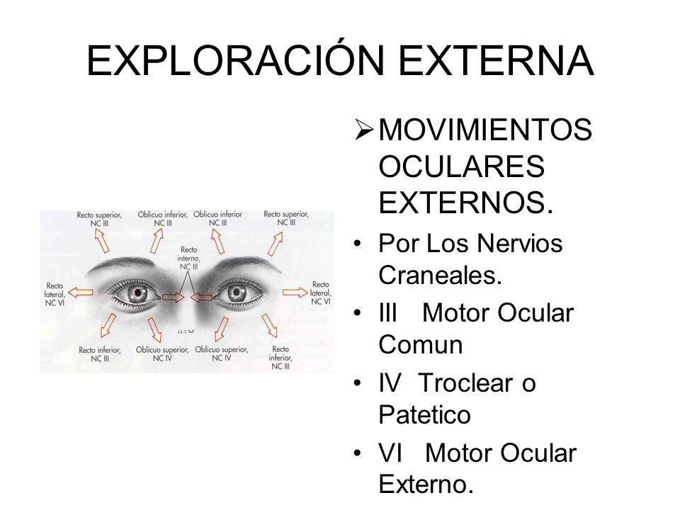 EXPLORACIÓN EXTERNA EXOFTALMOS Aumento del volumen del contenido orbitario. Protusión anterior del globo ocular Enf. De Graves » Causa más común Posib