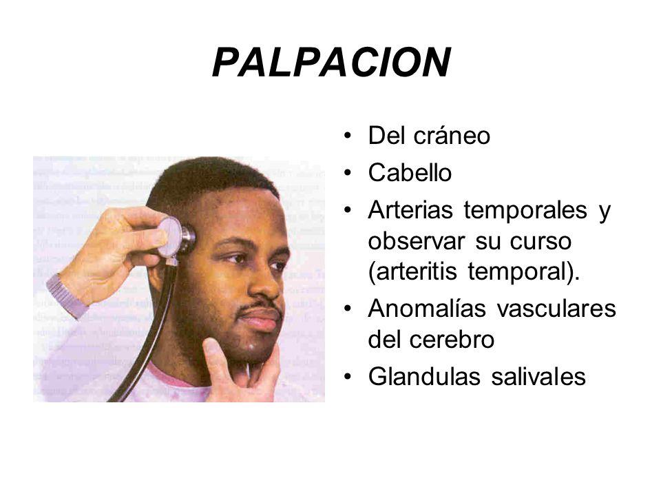 PALPACION Del cráneo Cabello Arterias temporales y observar su curso (arteritis temporal).