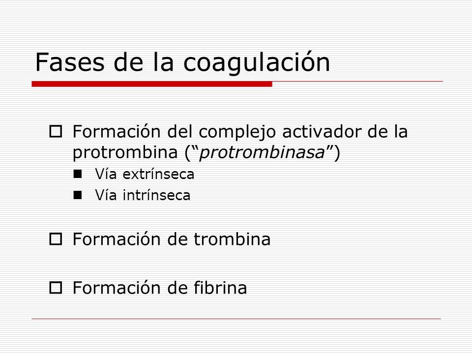 Fases de la coagulación Formación del complejo activador de la protrombina (protrombinasa) Vía extrínseca Vía intrínseca Formación de trombina Formaci