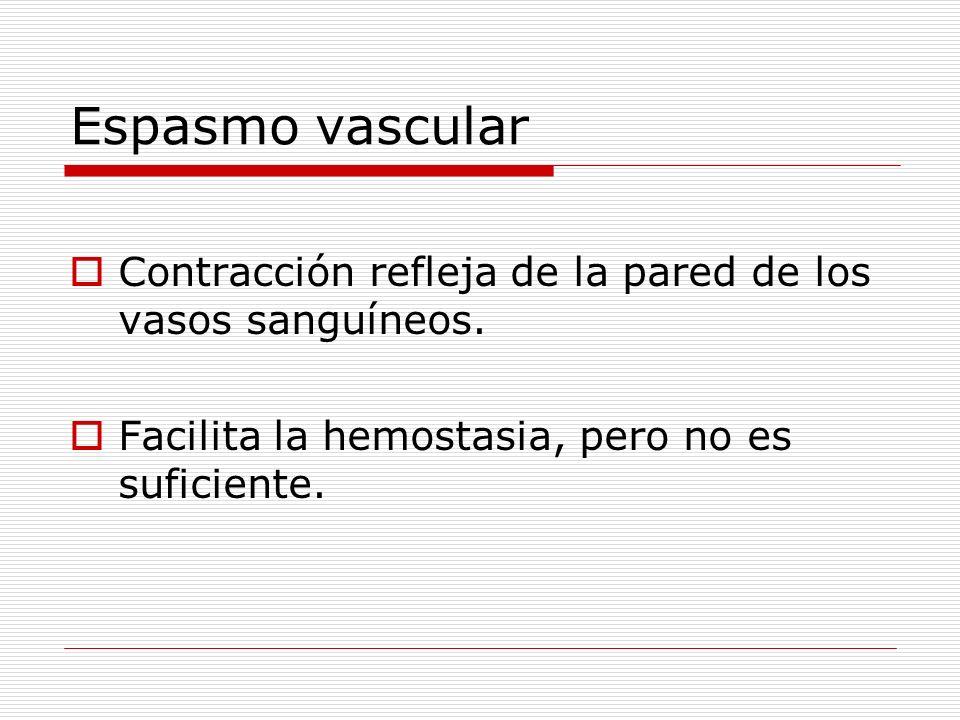 Espasmo vascular Contracción refleja de la pared de los vasos sanguíneos. Facilita la hemostasia, pero no es suficiente.