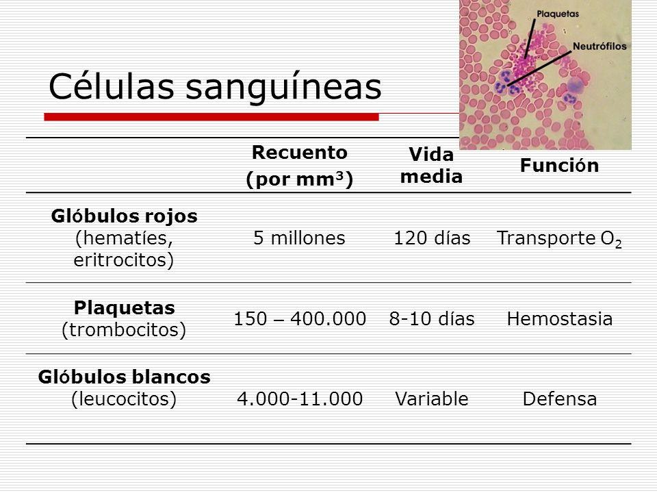 Células sanguíneas Recuento (por mm 3 ) Vida media Funci ó n Gl ó bulos rojos (hemat í es, eritrocitos) 5 millones120 d í asTransporte O 2 Plaquetas (