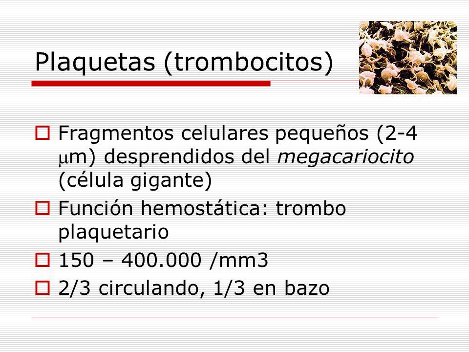 Plaquetas (trombocitos) Fragmentos celulares pequeños (2-4m) desprendidos del megacariocito (célula gigante) Función hemostática: trombo plaquetario 1