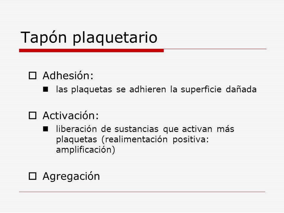 Tapón plaquetario Adhesión: las plaquetas se adhieren la superficie dañada Activación: liberación de sustancias que activan más plaquetas (realimentac