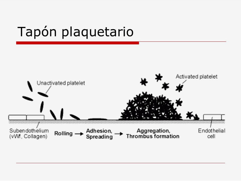 Tapón plaquetario