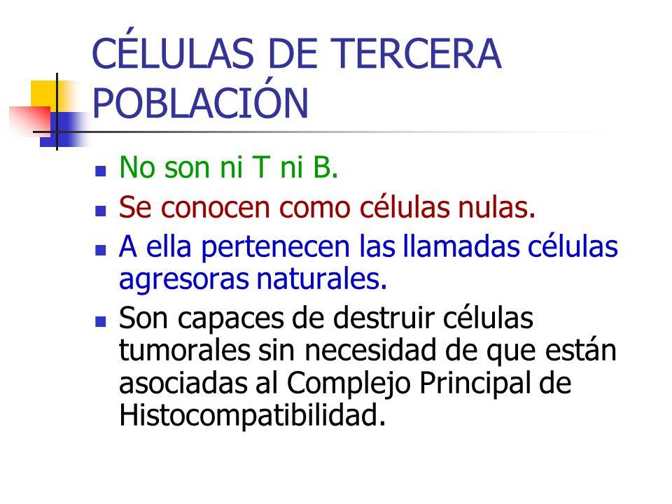 CÉLULAS DE TERCERA POBLACIÓN No son ni T ni B. Se conocen como células nulas. A ella pertenecen las llamadas células agresoras naturales. Son capaces
