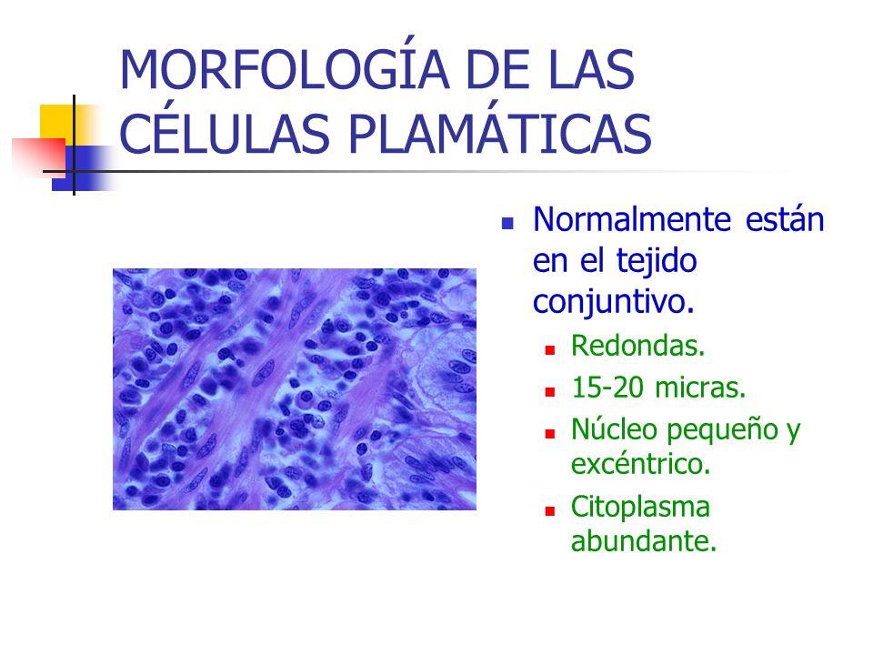 MORFOLOGÍA DE LAS CÉLULAS PLAMÁTICAS Normalmente están en el tejido conjuntivo. Redondas. 15-20 micras. Núcleo pequeño y excéntrico. Citoplasma abunda