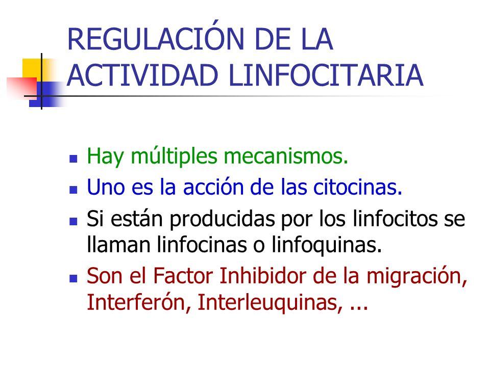 REGULACIÓN DE LA ACTIVIDAD LINFOCITARIA Hay múltiples mecanismos. Uno es la acción de las citocinas. Si están producidas por los linfocitos se llaman