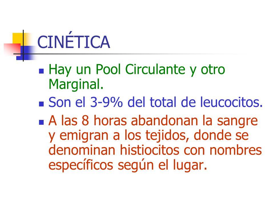CINÉTICA Hay un Pool Circulante y otro Marginal. Son el 3-9% del total de leucocitos. A las 8 horas abandonan la sangre y emigran a los tejidos, donde