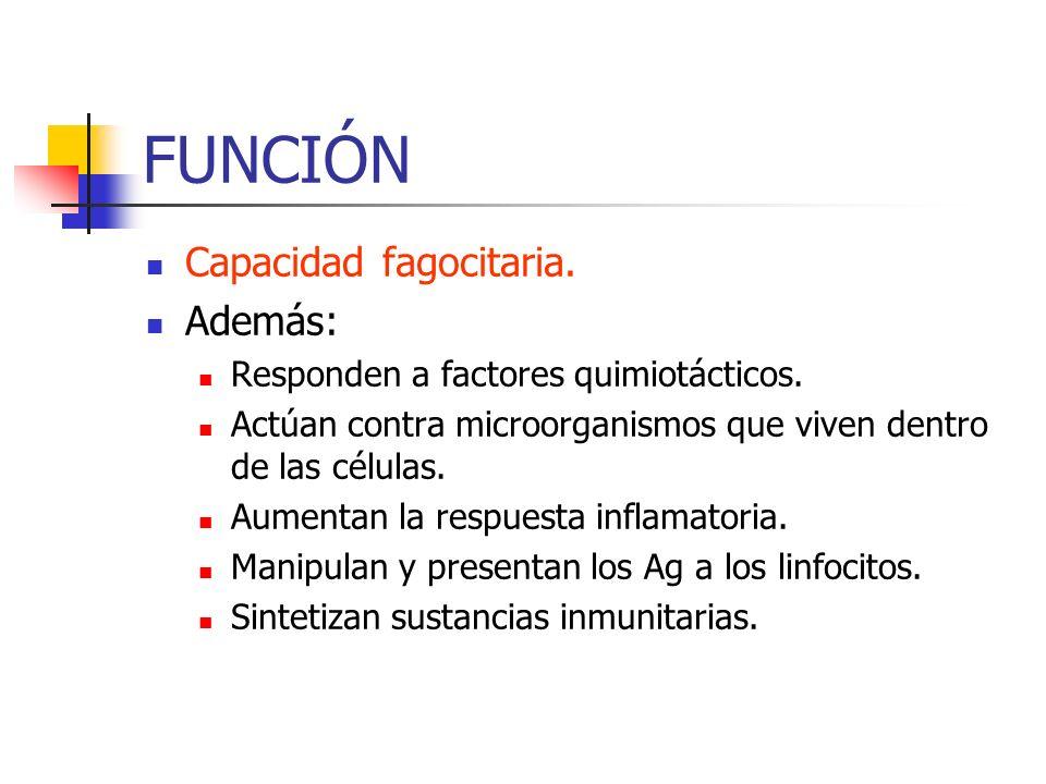 FUNCIÓN Capacidad fagocitaria. Además: Responden a factores quimiotácticos. Actúan contra microorganismos que viven dentro de las células. Aumentan la