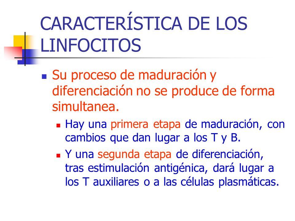 CARACTERÍSTICA DE LOS LINFOCITOS Su proceso de maduración y diferenciación no se produce de forma simultanea. Hay una primera etapa de maduración, con