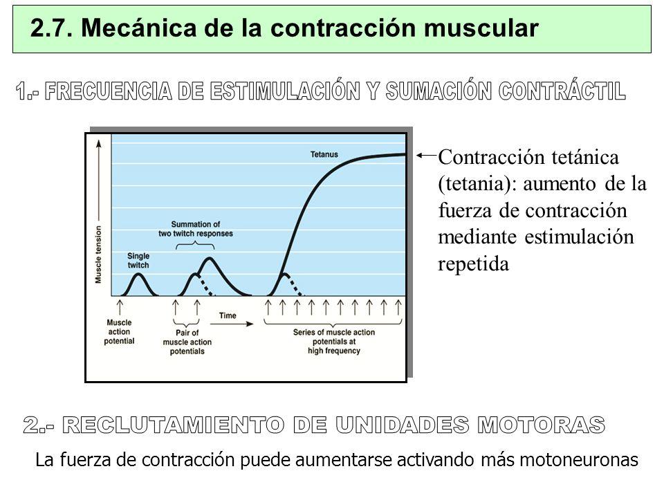 La fuerza de contracción puede aumentarse activando más motoneuronas 2.7. Mecánica de la contracción muscular Contracción tetánica (tetania): aumento