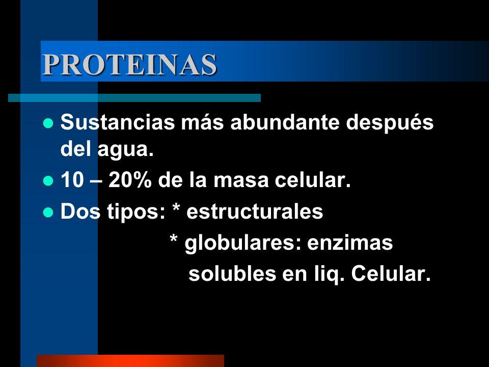 PROTEINAS Sustancias más abundante después del agua. 10 – 20% de la masa celular. Dos tipos: * estructurales * globulares: enzimas solubles en liq. Ce