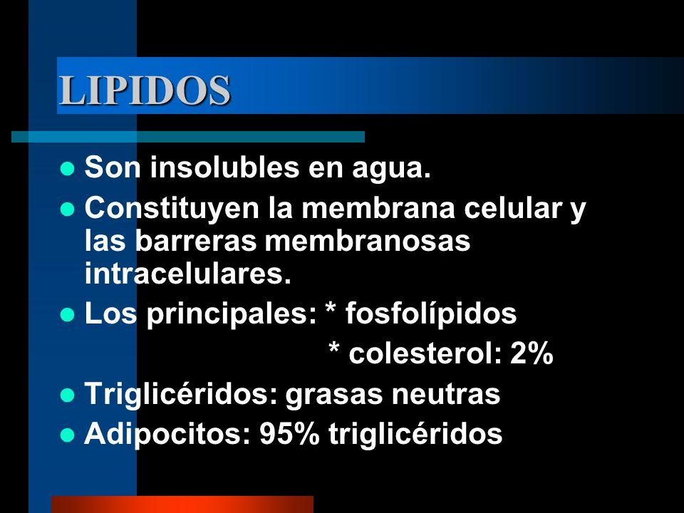 LIPIDOS Son insolubles en agua. Constituyen la membrana celular y las barreras membranosas intracelulares. Los principales: * fosfolípidos * colestero