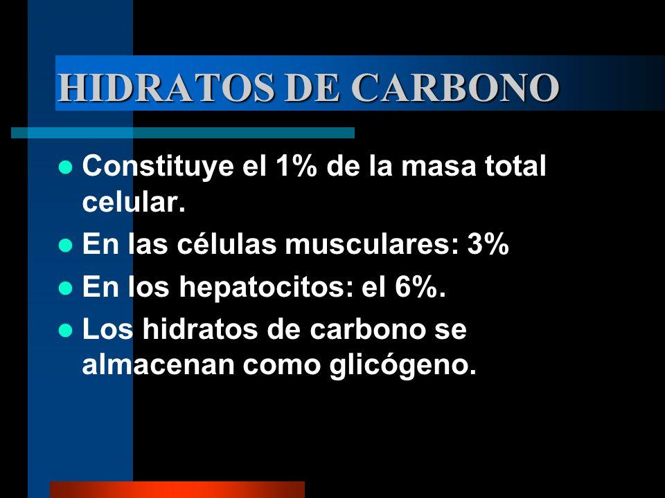 HIDRATOS DE CARBONO Constituye el 1% de la masa total celular. En las células musculares: 3% En los hepatocitos: el 6%. Los hidratos de carbono se alm