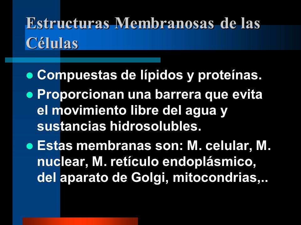 Estructuras Membranosas de las Células Compuestas de lípidos y proteínas. Proporcionan una barrera que evita el movimiento libre del agua y sustancias