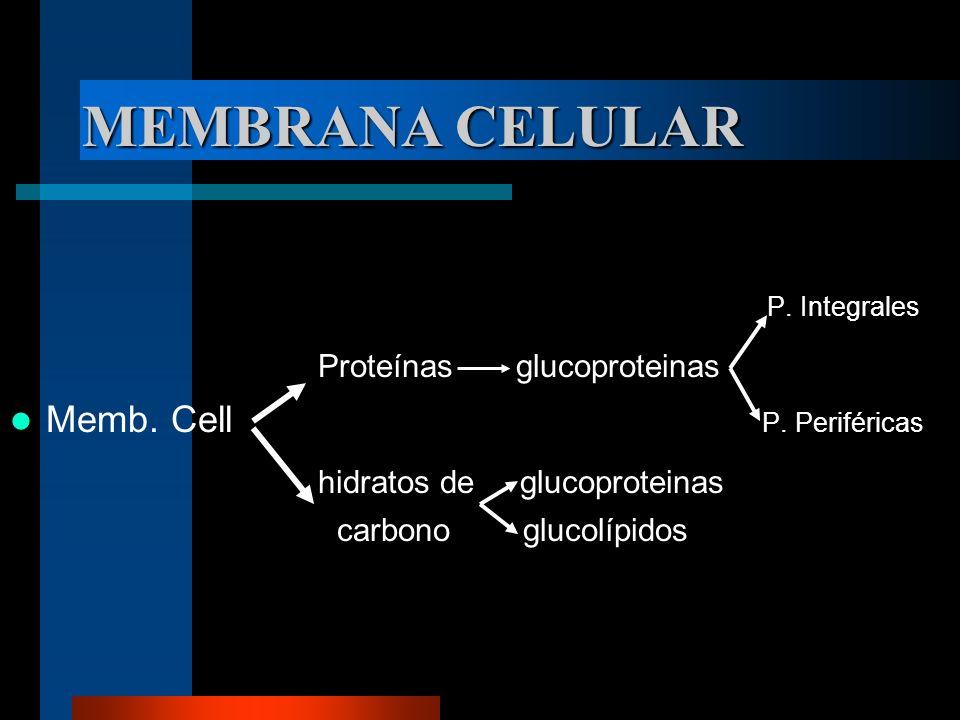 MEMBRANA CELULAR P. Integrales Proteínas glucoproteinas Memb. Cell P. Periféricas hidratos de glucoproteinas carbono glucolípidos