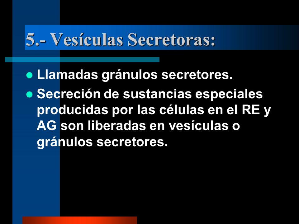 5.- Vesículas Secretoras: Llamadas gránulos secretores. Secreción de sustancias especiales producidas por las células en el RE y AG son liberadas en v