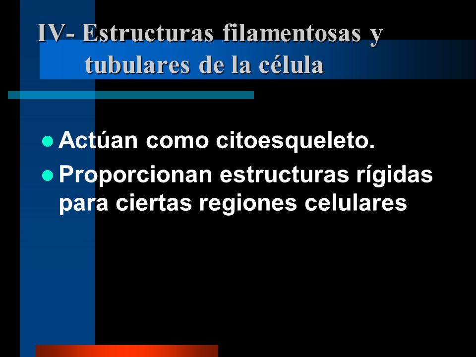 IV- Estructuras filamentosas y tubulares de la célula Actúan como citoesqueleto. Proporcionan estructuras rígidas para ciertas regiones celulares