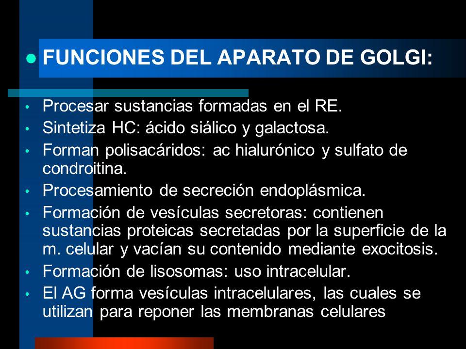FUNCIONES DEL APARATO DE GOLGI: Procesar sustancias formadas en el RE. Sintetiza HC: ácido siálico y galactosa. Forman polisacáridos: ac hialurónico y