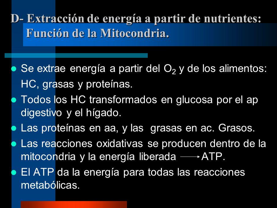 D- Extracción de energía a partir de nutrientes: Función de la Mitocondria. Se extrae energía a partir del O 2 y de los alimentos: HC, grasas y proteí