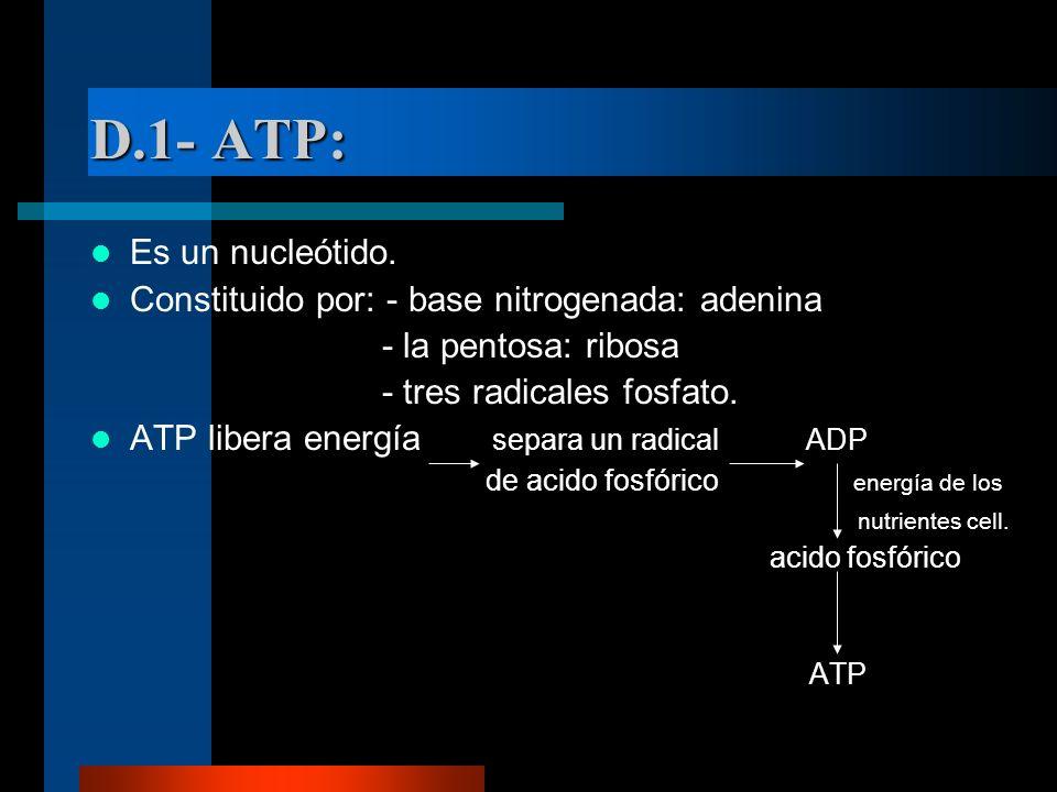 D.1- ATP: Es un nucleótido. Constituido por: - base nitrogenada: adenina - la pentosa: ribosa - tres radicales fosfato. ATP libera energía separa un r