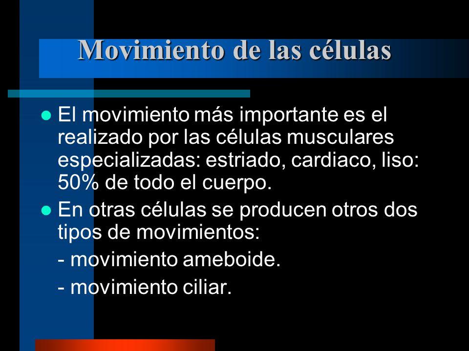 Movimiento de las células El movimiento más importante es el realizado por las células musculares especializadas: estriado, cardiaco, liso: 50% de tod