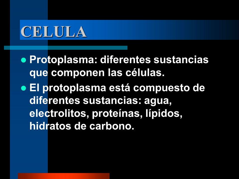 CELULA Protoplasma: diferentes sustancias que componen las células. El protoplasma está compuesto de diferentes sustancias: agua, electrolitos, proteí