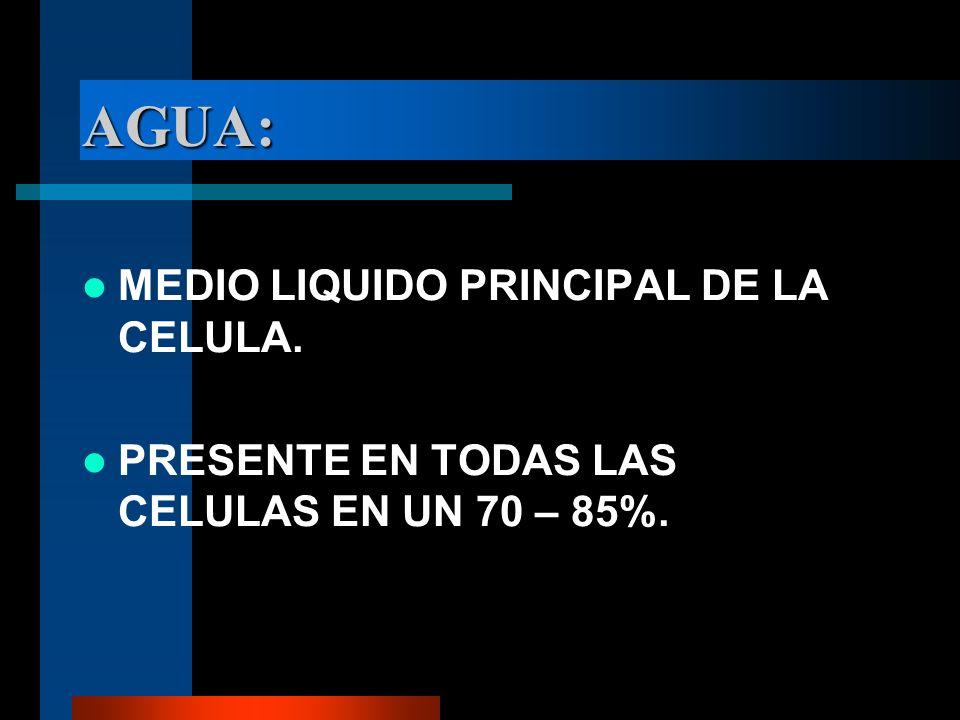 AGUA: MEDIO LIQUIDO PRINCIPAL DE LA CELULA. PRESENTE EN TODAS LAS CELULAS EN UN 70 – 85%.