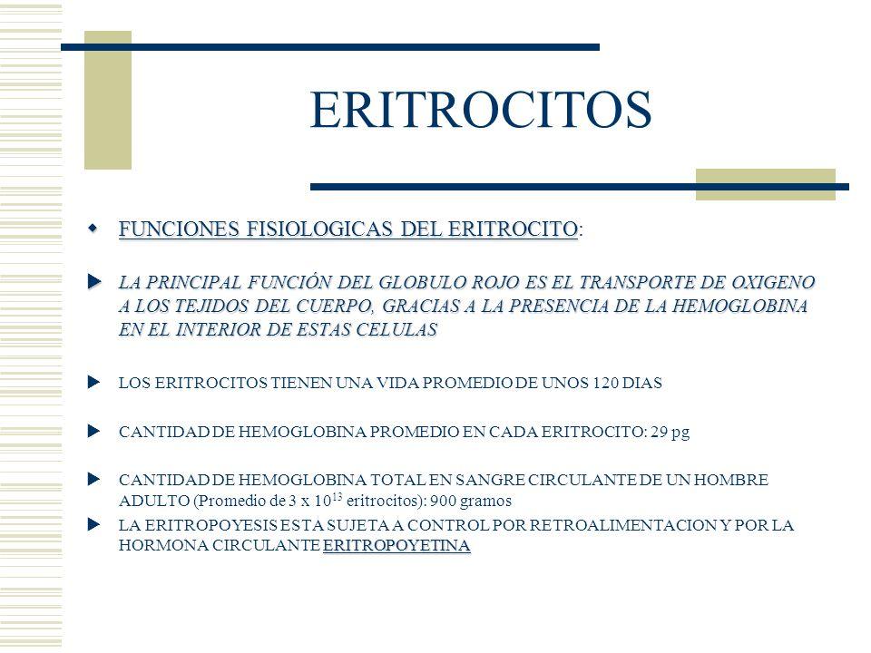 ERITROCITOS FUNCIONES FISIOLOGICAS DEL ERITROCITO FUNCIONES FISIOLOGICAS DEL ERITROCITO: LA PRINCIPAL FUNCIÓN DEL GLOBULO ROJO ES EL TRANSPORTE DE OXI