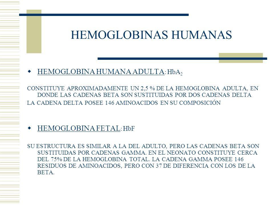 HEMOGLOBINAS HUMANAS HEMOGLOBINA HUMANA ADULTA : HbA 2 CONSTITUYE APROXIMADAMENTE UN 2,5 % DE LA HEMOGLOBINA ADULTA, EN DONDE LAS CADENAS BETA SON SUS