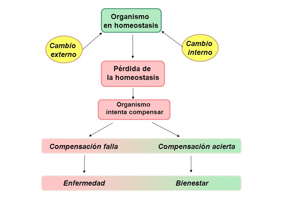 Organismo en homeostasis Cambio externo Cambio interno Pérdida de la homeostasis Organismo intenta compensar Compensación falla Compensación acierta E