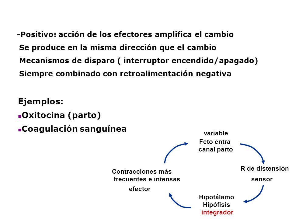 -Positivo: acción de los efectores amplifica el cambio Se produce en la misma dirección que el cambio Mecanismos de disparo ( interruptor encendido/ap