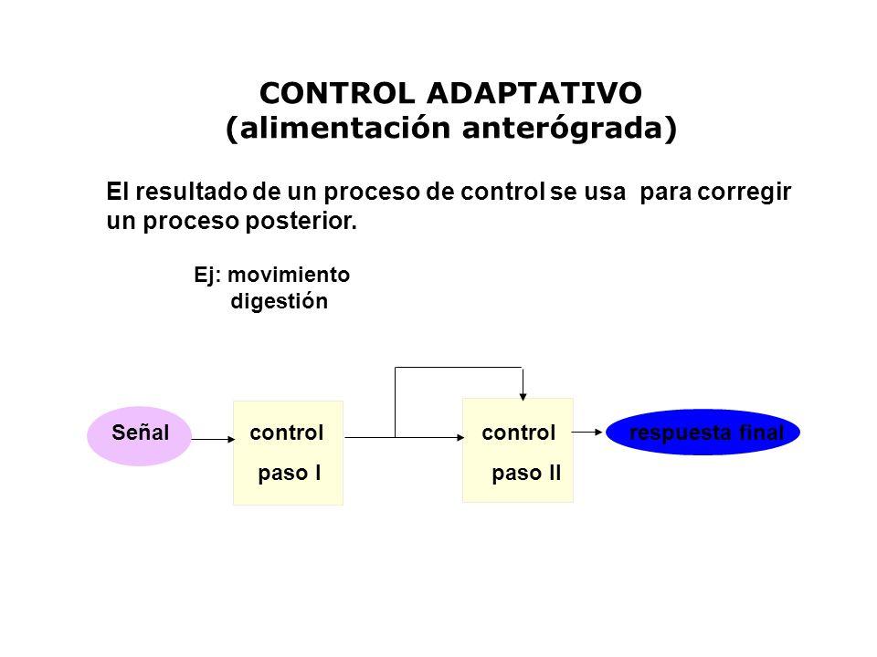CONTROL ADAPTATIVO (alimentación anterógrada) El resultado de un proceso de control se usa para corregir un proceso posterior. Ej: movimiento digestió